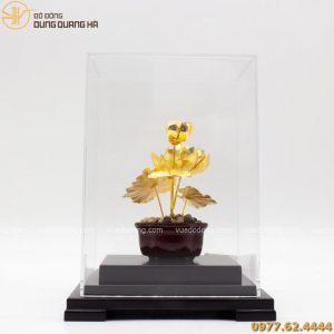 hoa sen (1)