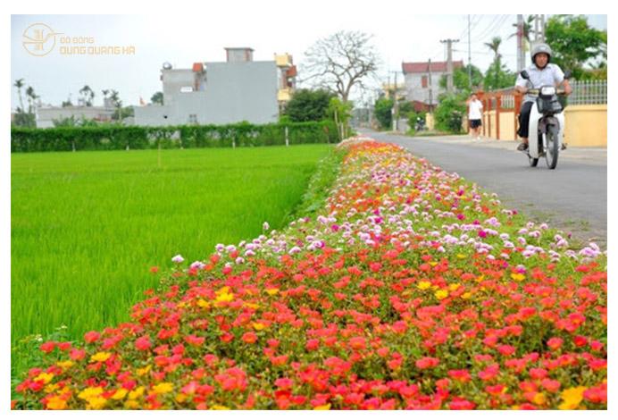 Làng quê Nam Định yên bình