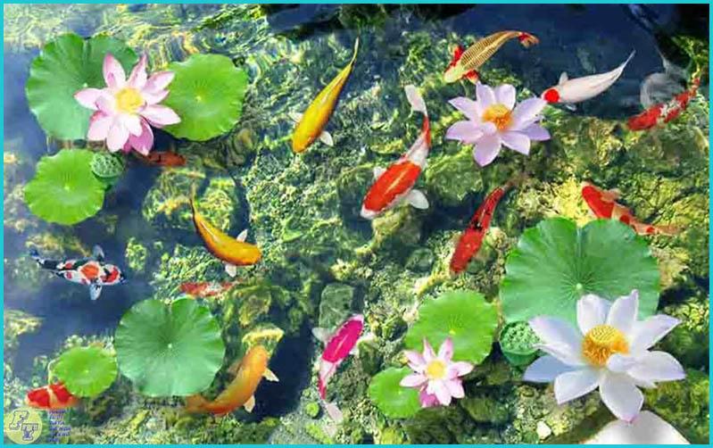 Cá chép và hoa sen